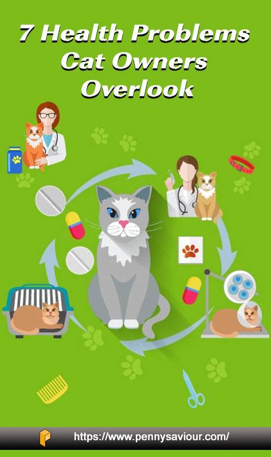 Health Problems Cat Owners Overlook Pinterest