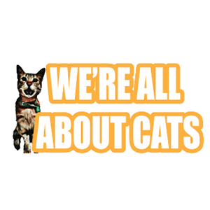 We`re All About Cats