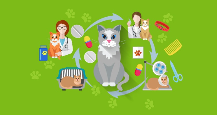 7 Health Problems Cat Owners Overlook