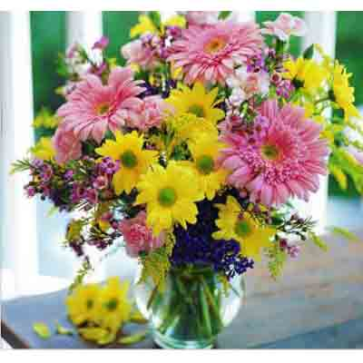 mixed spring daisy dase deal pack.jpg